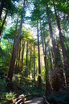 Muir Woods: What to do, where to eat, and where to stay in San Francisco | tablefortwoblog.com