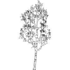 betula pendula - Szukaj w Google