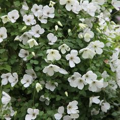 clematis (group 3)  Position: full sun or partial shade Soil: fertile, well-drained, neutral soil Rate of growth: fast-growing Flowering period: July to October Hardiness: fully hardy