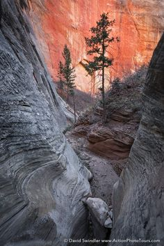 Checkerboard Canyon (Zion NP, Utah) by David Swindler on 500px