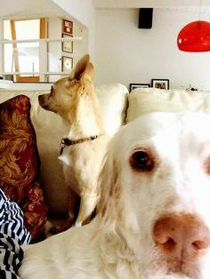 Mac & Toto. Full Alert...