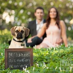 "Cute engagement pics in Santa Barbara, CA with Waller Wedding Photography that included creative pics with their dog!  I would personally love this at the wedding with a sign that says, ""Welcome to my humans' wedding!"" Adorable!!"