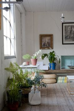 cracked plaster + potted plants