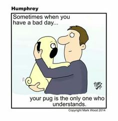 Pugs understand