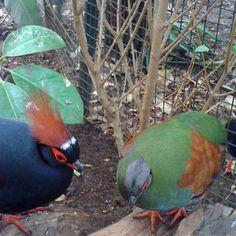 Birds - taken at Amazon World IOW