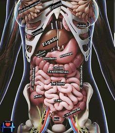 Medicine Notes, Medicine Student, Human Body Anatomy, Muscle Anatomy, Medical Anatomy, Anatomy Study, Med Student, Medical Information, Med School