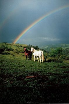 Horses in Idaho by Christinamari on Flickr.Look! A double rainbow!!!!