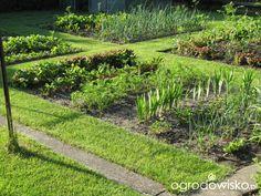 Pokażę nasz ogród - strona 40 - Forum ogrodnicze - Ogrodowisko