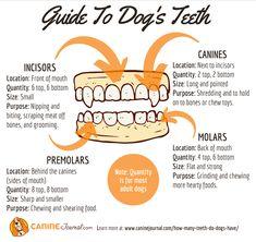 Sad Dog Stories, Rawhide Bones, Stronger Teeth, Dog Teeth, Healthy Teeth, Dog Chews, Teeth Cleaning, Happy Dogs, Your Dog