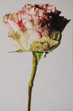 Rose by Robert Lemay