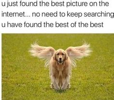 50 Funny & Cute Dog Pictures