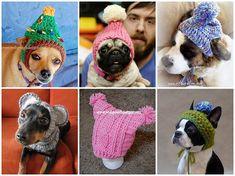 Как связать шапку для собаки спицами и крючком