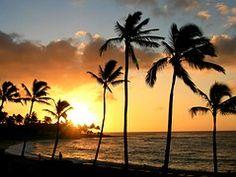 Hawaii, Tropische, Palmboom