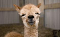 Image result for duchenne smile