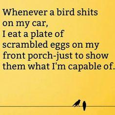 Scrambled eggs you damn birds