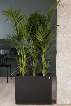Grønne planter på kontoret gjør deg mer effektiv | Inspirasjon fra Mester Grønn Hanging Canvas, Work Surface, Modern Kitchen Design, Artist Canvas, Stuff To Do, Art Pieces, Planters, Gallery Wall, Canvas Prints