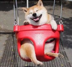 52ea94e2822 Happy Shiba Inu Swings Its Way Into a Fantastic Photoshop Battle