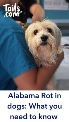 Dieta renal casera royal canin