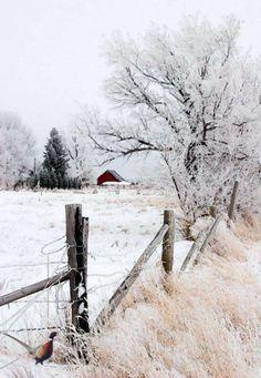 45 Best Painting landscape Winter Snow Scenes Ideas – Page 23 of 45 – Veguci – Landscaping 2020 Winter Szenen, Winter Magic, Winter Time, Winter Colors, Fotografia Macro, Winter's Tale, Snow Scenes, Winter Pictures, Nature Pictures