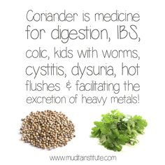 Coriander seeds are pungent, bitter and sweet and warming in energy while fresh coriander leaves are cooling in energy. Coriander is an excellent remedy for digestion as it enkindles the digestive fire without increasing acidity. It is also good for treating abdominal pain, nausea, IBS, colic, flatulence, griping and bloating. The powder of the seed is also used for worms in children. Coriander has an affinity with the urinary tract and is useful in the case of cyctitis, dysuria.