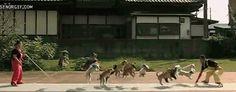 jumping puppies