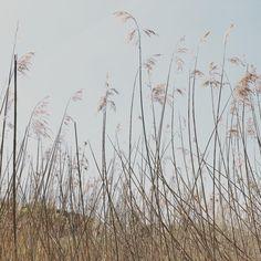 🌾 Eine Eiche und ein Schilfrohr waren sich uneinig über ihre Stärke. Als ein heftiger Sturm aufkam, beugte und wiegte sich das Schilfrohr im Wind, um nicht zu brechen. Die Eiche aber blieb aufrecht stehen und wurde entwurzelt. . ... was zum Studieren oder zum Vergessen - ganz wie du willst 😜 Dandelion, Flowers, Plants, Stand Tall, To Study, Left Out, Pipes, Oak Tree, Flora