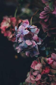 Hortensia | Pinterest: Natalia Escaño