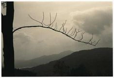 masao yamamoto photography - Pesquisa Google