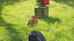 (Photo:INSIDE EDITION) via @AOL_Lifestyle Read more: https://www.aol.com/article/news/2017/04/06/bird-comforts-grieving-mother-as-she-visits-late-sons-grave-on/22029523/?a_dgi=aolshare_pinterest#fullscreen
