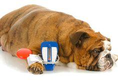 Petzlife 100% natural, organico, eficaz para cuidar do seu Pet | Como diagnosticas e cuidar de pets com doenças crônicas