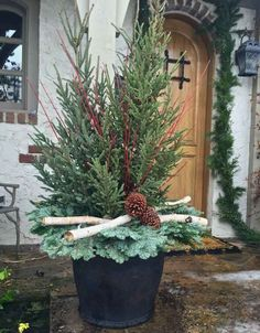 and state: Winter Containers 2016 Outdoor Christmas Planters, Christmas Urns, Front Door Christmas Decorations, Christmas Eve, Christmas Flower Arrangements, Christmas Centerpieces, Winter Container Gardening, Winter Planter, Winter Garden