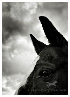 Gallery | thehorsephotographers.co.uk | Equine photography | Horse photography