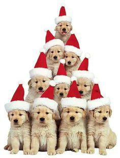 Christmas Puppy, Christmas Animals, Merry Christmas, Christmas Puzzle, Animals And Pets, Baby Animals, Cute Animals, Golden Retrievers, Cute Puppies