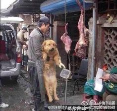 @Chinafile The corrupt dog meat trade is fuel for the YuLin Festival. #StopYuLinFest Embedded image permalink
