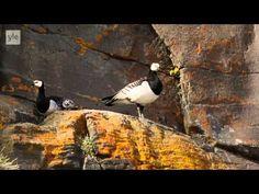 Avara Luonto - Villi Pohjola (6/6) Grönlanti