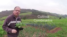 Cultivo combinado de repollo y cebolla (tuhuertofacil.es)