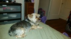 Armani my granddog