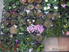 [d.i.y 재료]동대문 종합시장 추천업체#1 : 네이버 블로그 Plants, Plant, Planets