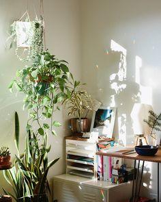 Best Desk Plants 12 For The Office Desk Plant Best