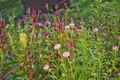 Rady do záhrady, vďaka ktorým sa zbytočne nenarobíte Plants, Compost, Plant, Planets