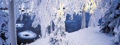 Kuvahaun tulos haulle vuoden luontokuvat