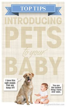 Worried about bringing your new baby home to your dogs or cats? Top tips for introducing pets to your new baby girl or baby boy!