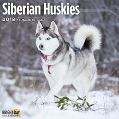 58951121c5f Siberian Husky 2018 Calendar 16 Month Wall Calendar 12 x 12 inches Bright  Day Calendars Publishing