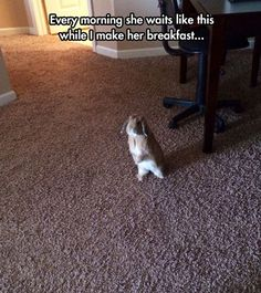 Every morning she waits like this...