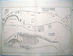 勇魚取絵詞  鯨肉調味方