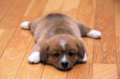 Awwe puppy