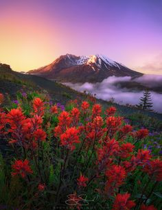 "My last photo was very well-received so here's the follow-up and main reason why I went out there (and yes slept in my car): indian paintbrush flowers! ""Indian Sunrise"" - Mount St. Helens in Washington State [OC] [924x1200]"