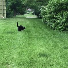 GIF It seems my cat is not friends with his head