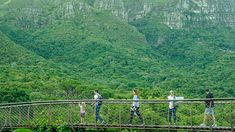 Pretty amazing view of the Boomslang Walkway at Kirstenbosch Botanical Gardens. (via thecoconutrace.com)