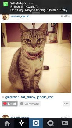 Meow Cat | Pawshake
